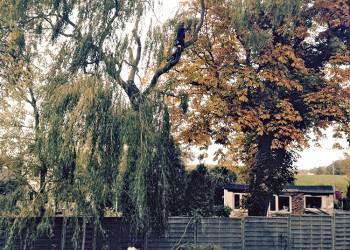 baumpflege-nord-philipp-schwarz-p7